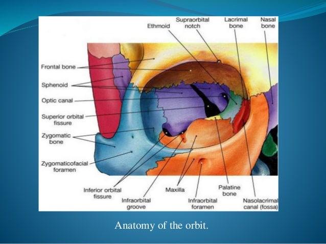 Orbital Floor Blow Out Fractures