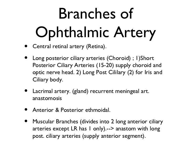 Orbital nerves and vessels