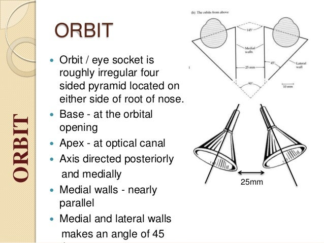 Orbit And Eye