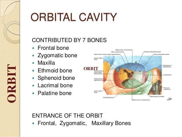 1128998 together with 1073447 also Foramen Lacerum also Sphenoid Bone Osteology also Chapter 1 The Human Body An Orientation Part B Shilla Chakrabarty Ph D. on cranial body cavity