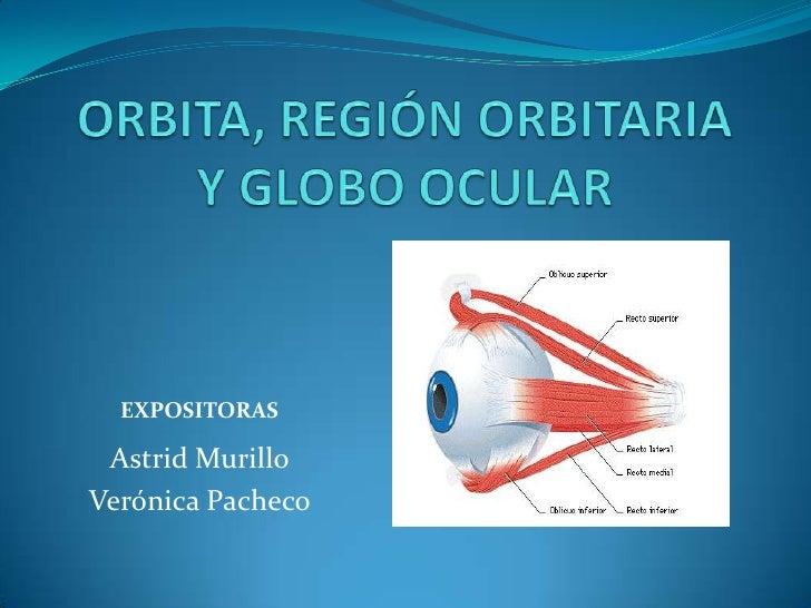 ORBITA, REGIÓN ORBITARIA Y GLOBO OCULAR<br />EXPOSITORAS<br />Astrid Murillo<br />Verónica Pacheco<br />