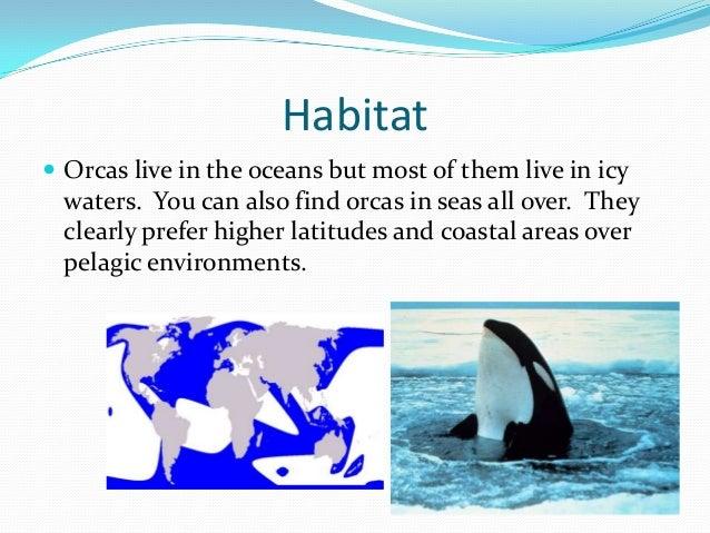 Orcas by Annette E.