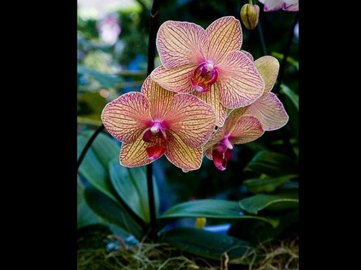 Orchid Queen - Part 3 Slide 2