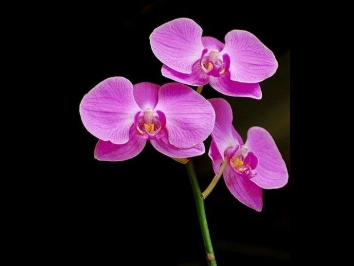 Orchid Queen - Part 3 Slide 3