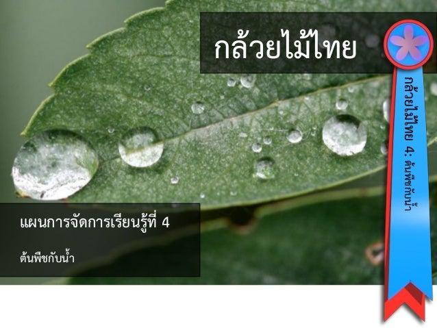 กล้วยไม้ไทย กล้วยไม้ไทย4:ต้นพืชกับน้ำ แผนกำรจัดกำรเรียนรู้ที่ 4 ต้นพืชกับน้ำ