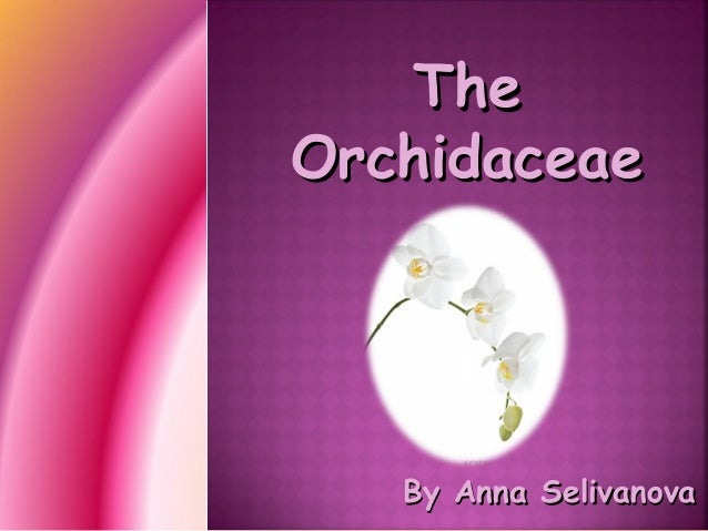 The Orchidaceae  By Anna Selivanova