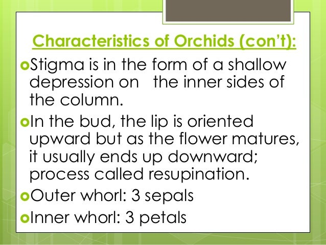 The main characteristics of stigmata