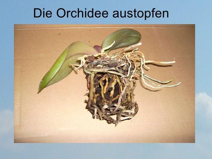 orchideen umtopfen. Black Bedroom Furniture Sets. Home Design Ideas