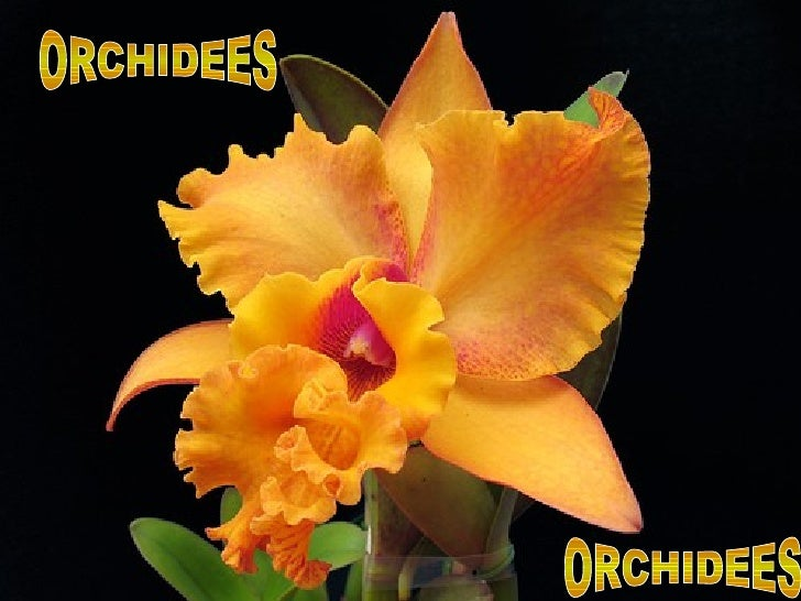 ORCHIDEES ORCHIDEES
