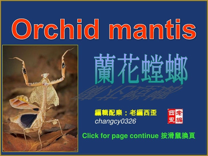 Orchid mantis<br />蘭花螳螂<br />編輯配樂:老編西歪<br />changcy0326<br />Click for page continue 按滑鼠換頁 <br />