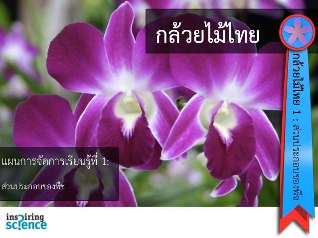 กล้วยไม้ไทย แผนการจัดการเรียนรู้ที่ 1: ส่วนประกอบของพืช กล้วยไม้ไทย1:ส่วนประกอบของพืช