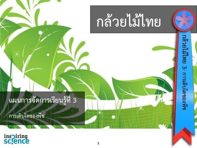 กล้วยไม้ไทย 1 กล้วยไม้ไทย3:การเติบโตของพืช แผนการจัดการเรียนรู้ที่ 3 การเติบโตของพืช