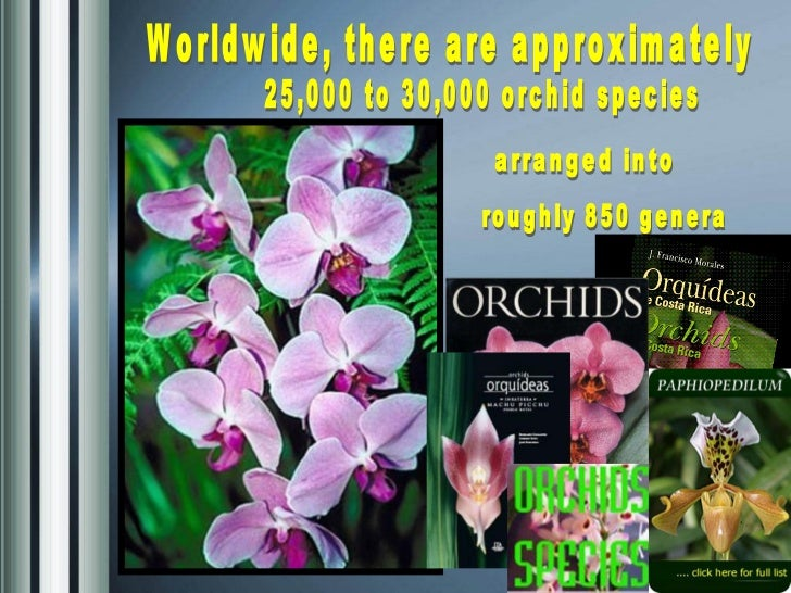 Worldwide, there are approximately  25,000 to 30,000 orchid species arranged into  roughly 850 genera