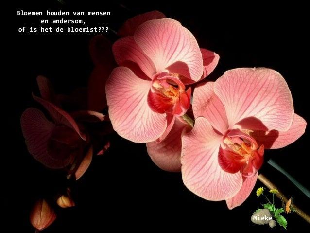 mooie bloemen spreuken Genoeg Spreuken Over Bloemen XPW 38 | Wofosogo mooie bloemen spreuken
