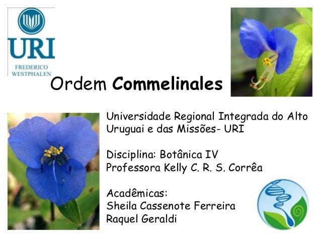 Ordem Commelinales Universidade Regional Integrada do Alto Uruguai e das Missões- URI Disciplina: Botânica IV Professora K...