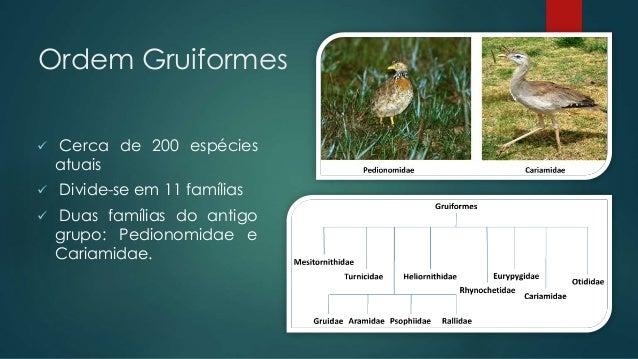 Ordem Gruiformes  Cerca de 200 espécies atuais  Divide-se em 11 famílias  Duas famílias do antigo grupo: Pedionomidae e...