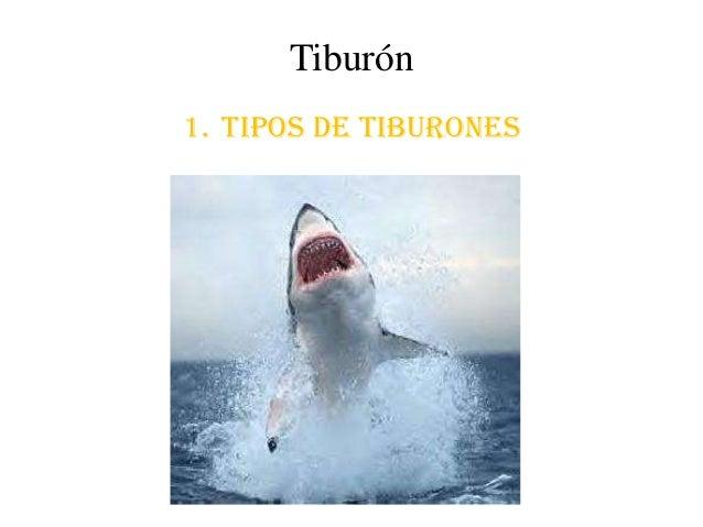 Tiburón1. Tipos de tiburones