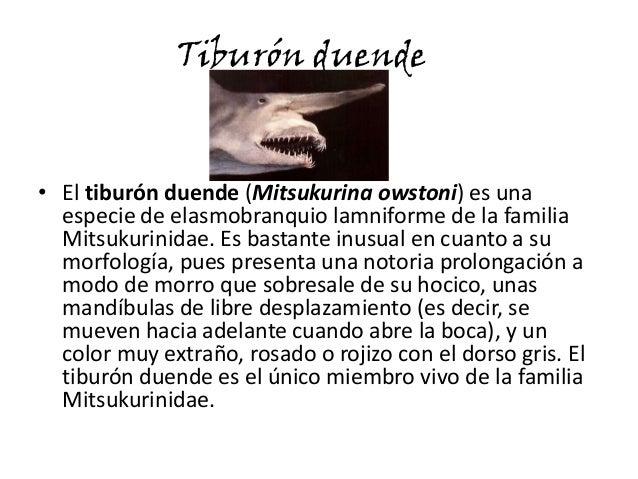 Tiburón duende• El tiburón duende (Mitsukurina owstoni) es unaespecie de elasmobranquio lamniforme de la familiaMitsukurin...