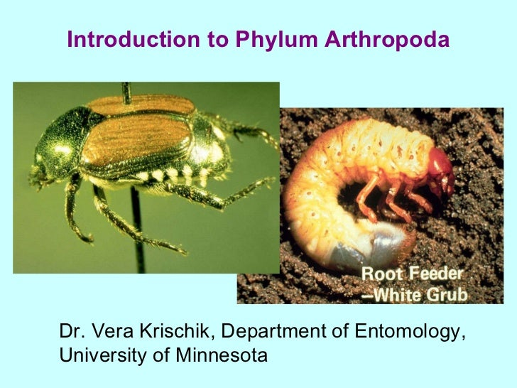 Introduction to Phylum Arthropoda Dr. Vera Krischik, Department of Entomology,  University of Minnesota