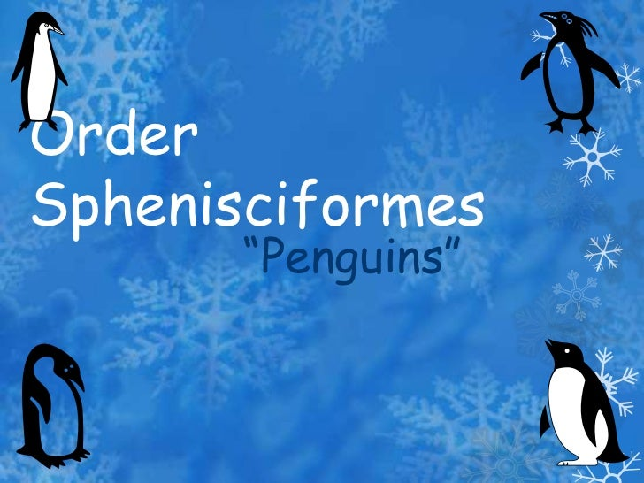 "Order Sphenisciformes<br />""Penguins""<br />"