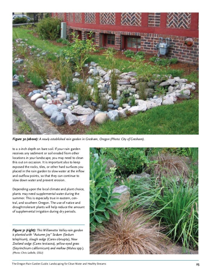 Oregon Rain Garden Guide