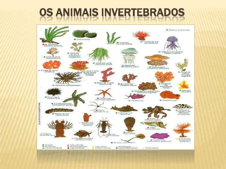 OS ANIMAIS INVERTEBRADOS