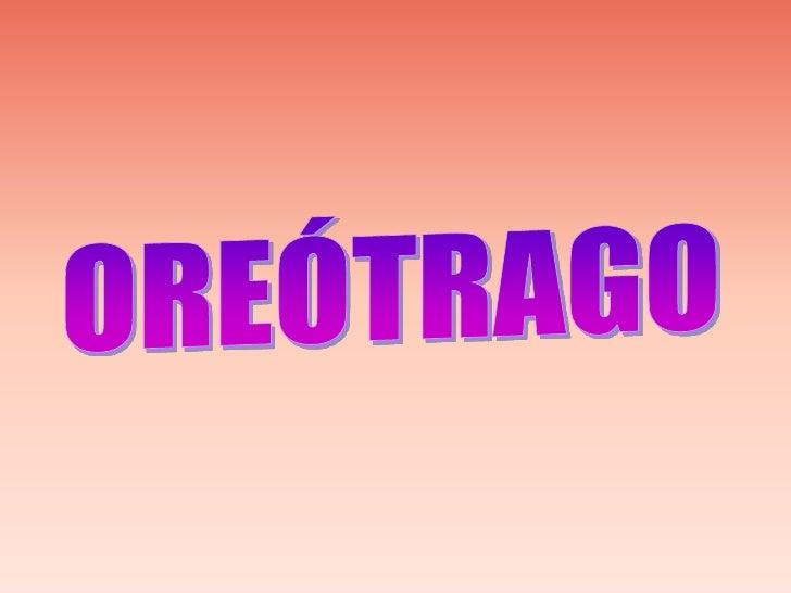 OREÓTRAGO<br />