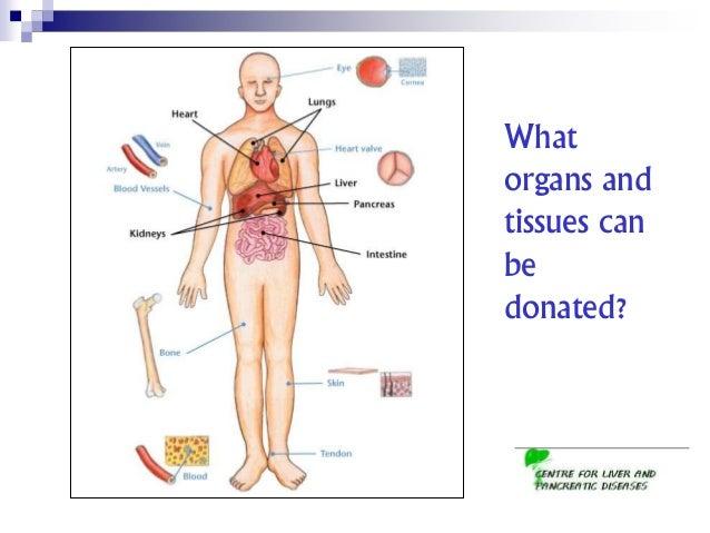 should organ donation be made compulsory