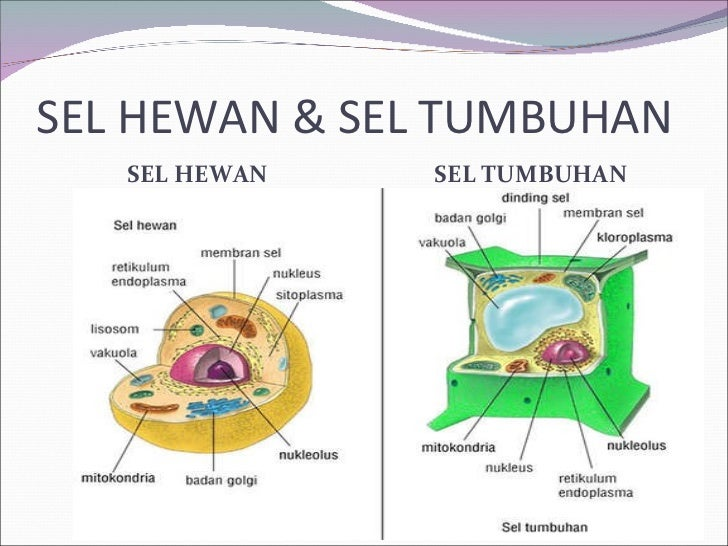 XIA Bab 1 Sel - Organel Sel