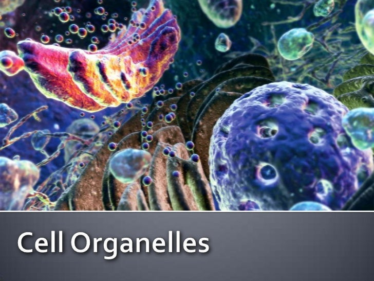 Cell Organelles<br />