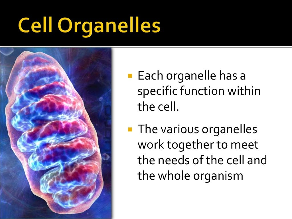 how do organelles work together for the cell to function