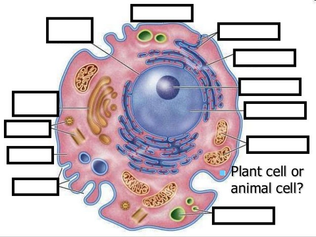 Parts Of Plant Cell Powerpoint Choice Image - How To Guide ...