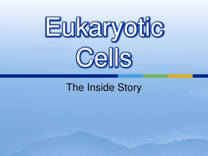 Eukaryotic   Cells  The Inside Story