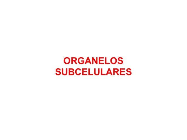 ORGANELOS SUBCELULARES