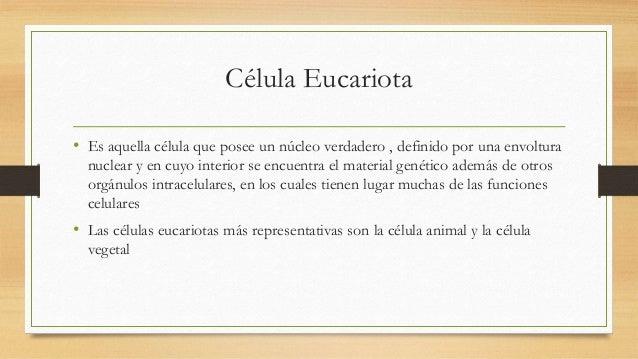 Célula Eucariota • Es aquella célula que posee un núcleo verdadero , definido por una envoltura nuclear y en cuyo interior...