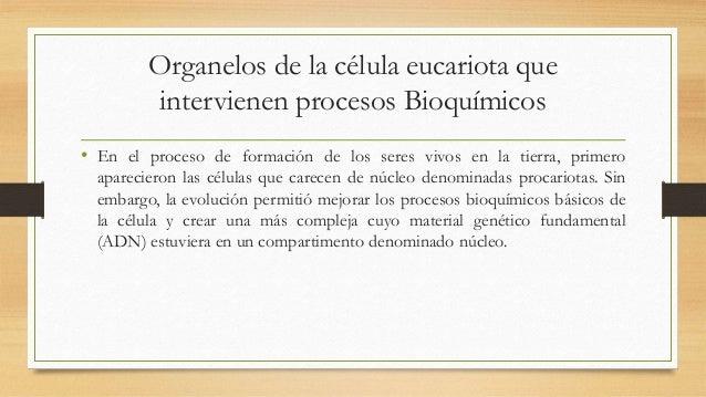 Organelos de la célula eucariota que intervienen procesos Bioquímicos • En el proceso de formación de los seres vivos en l...