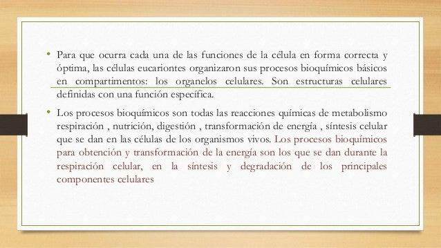 • Para que ocurra cada una de las funciones de la célula en forma correcta y óptima, las células eucariontes organizaron s...