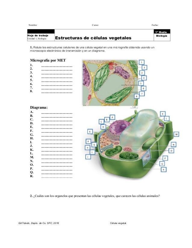 Organelos de células vegetales