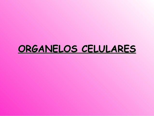 ORGANELOS CELULARESORGANELOS CELULARES