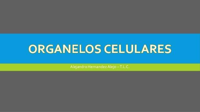 Alejandro Hernandez Alejo –T.L.C.