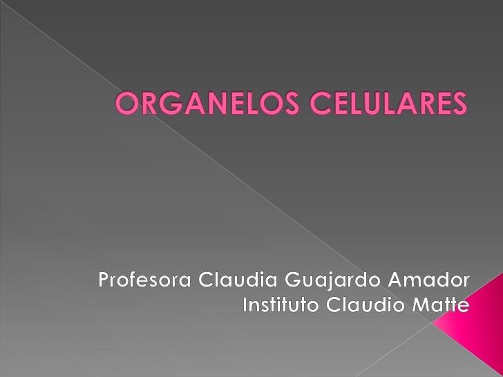 ORGANELOS CELULARES <br />Profesora Claudia Guajardo Amador<br />Instituto Claudio Matte<br />