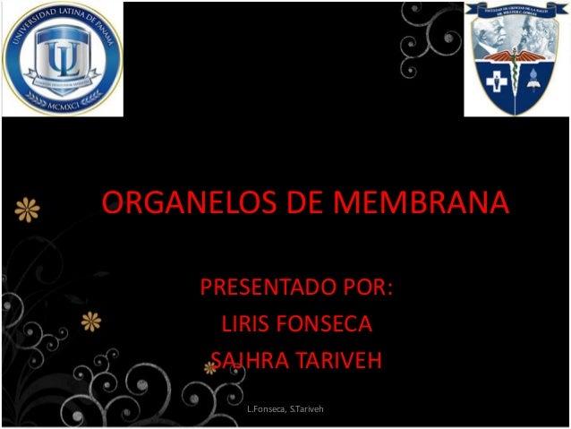 ORGANELOS DE MEMBRANA PRESENTADO POR: LIRIS FONSECA SAJHRA TARIVEH L.Fonseca, S.Tariveh