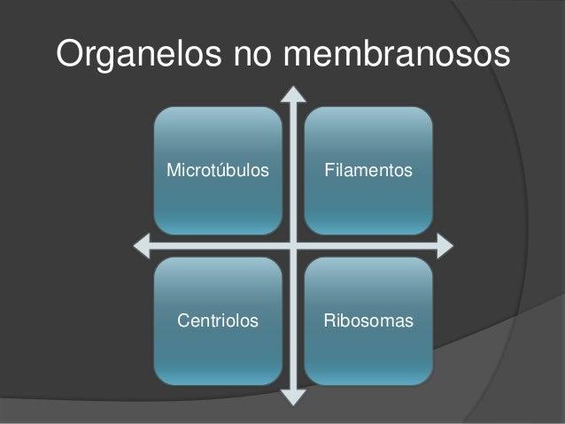Organelos no membranosos Slide 2