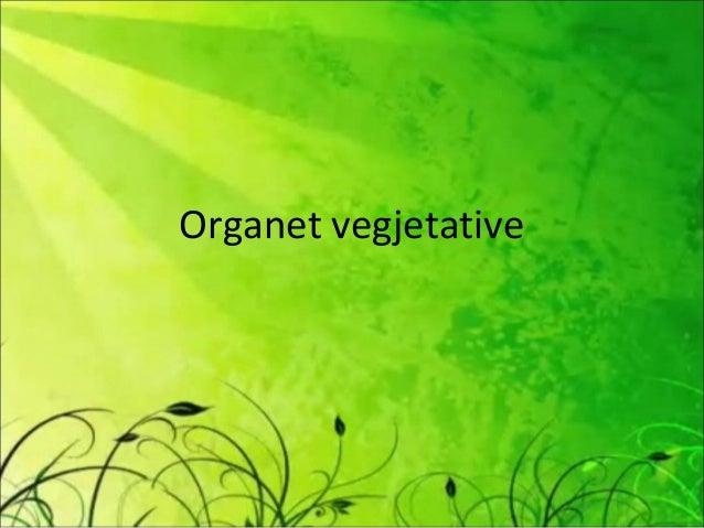 Organet vegjetative