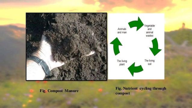 Organic enterprise project report by Ravi Teja Reddy