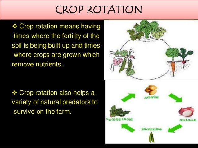 crop rotation and soil sustainability essay Article (pdf available) in environmental management 56(5) june 2015 with  533 reads  grasslands into arable crop rotations can sequester soil c  reduce  n 2 o emissions, and  in summary, soil microbes and vegetation provide.