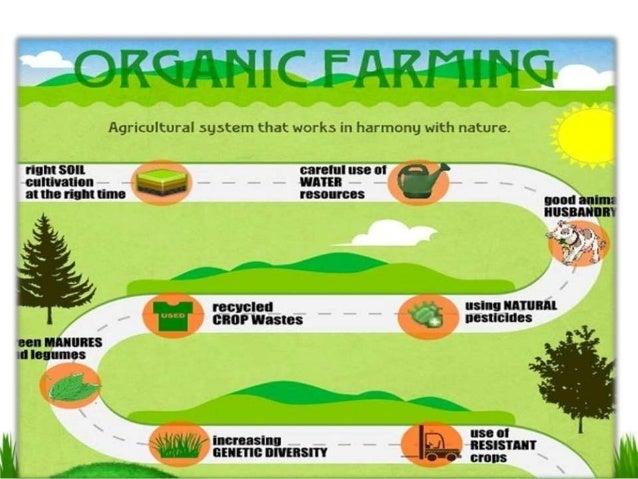 organic food pros and cons essay What is organic farming here are the pros and cons of organic farming the vitamin and mineral content of organic food products is always high as the soil.