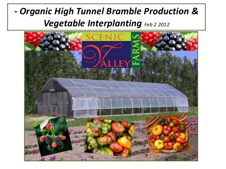 - Organic High Tunnel Bramble Production &       Vegetable Interplanting Feb 2 2012