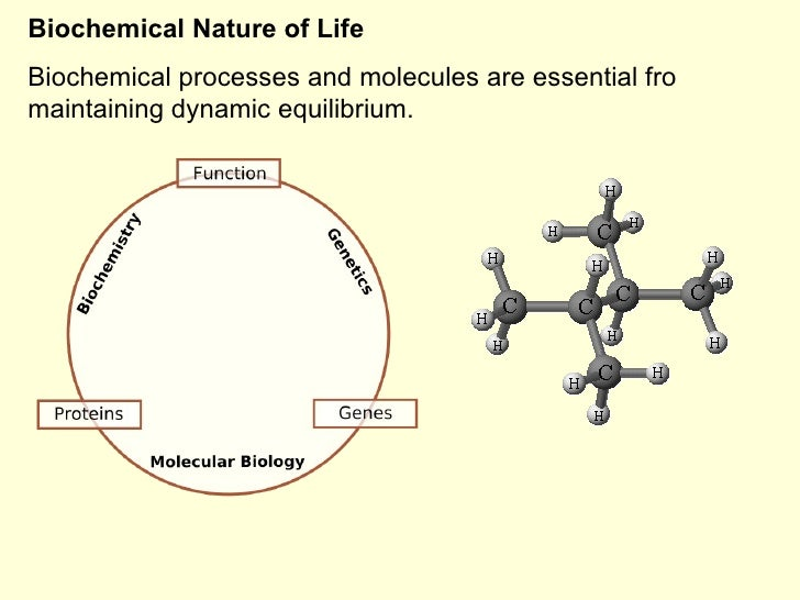 Biochemical Nature of Life Biochemical processes and molecules are essential fro maintaining dynamic equilibrium.