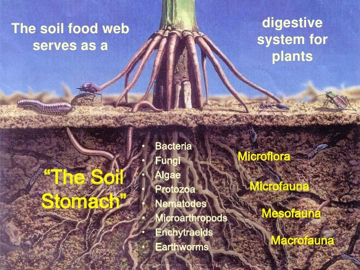 soil conservation matrix Soil conservation matrix review the three major types of soil degradation occurring in the environment briefly explain - answered by a verified tutor.